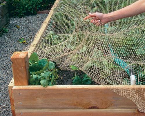 bird netting on a garden bed