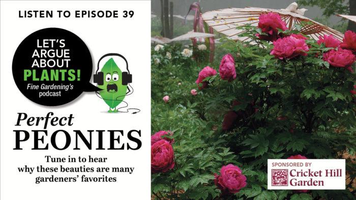Episode 39: Perfect Peonies