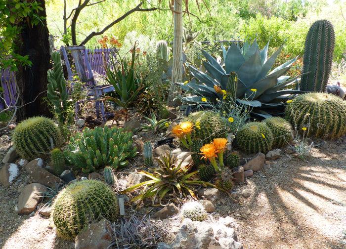 Inside Dan Johnson S High And Low Desert Gardens Southwest