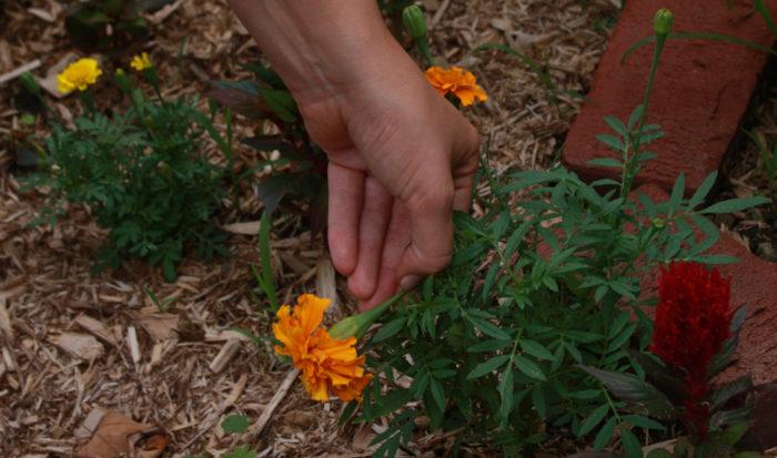 South: June Garden To-Do List | South Regional Report