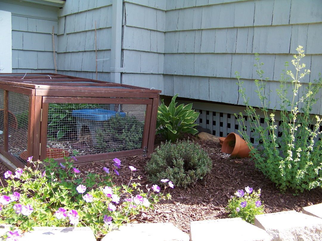 Making A Garden For Pet Turtles Finegardening