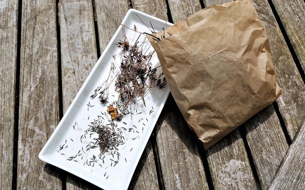 saving plant seeds