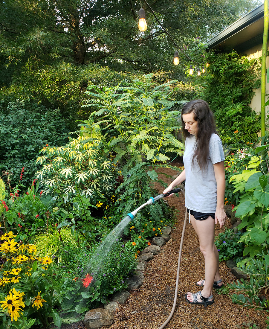 watering in summer