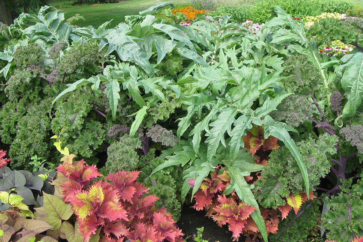 edibles and ornamentals