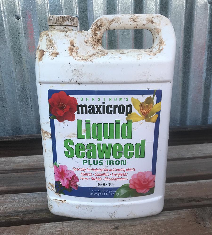 liquid seaweed