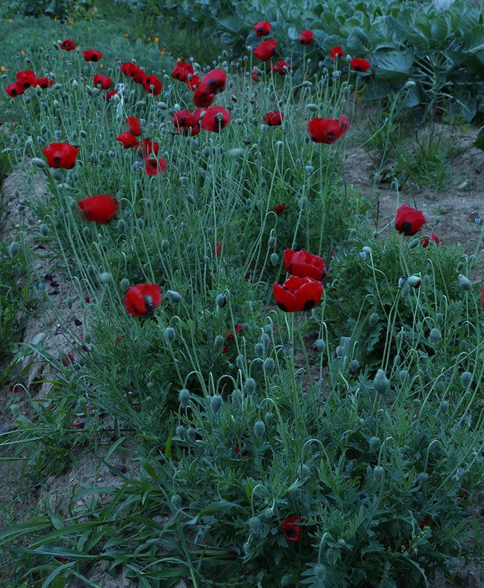 Southeast: August Garden To-Do List