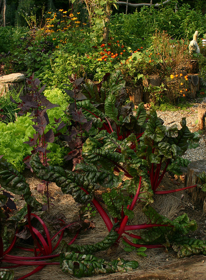 South: August Garden To-Do List