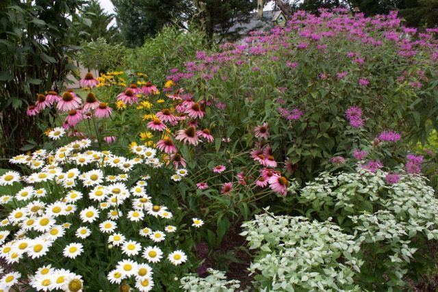 From Barren Lot to Pollinator Paradise