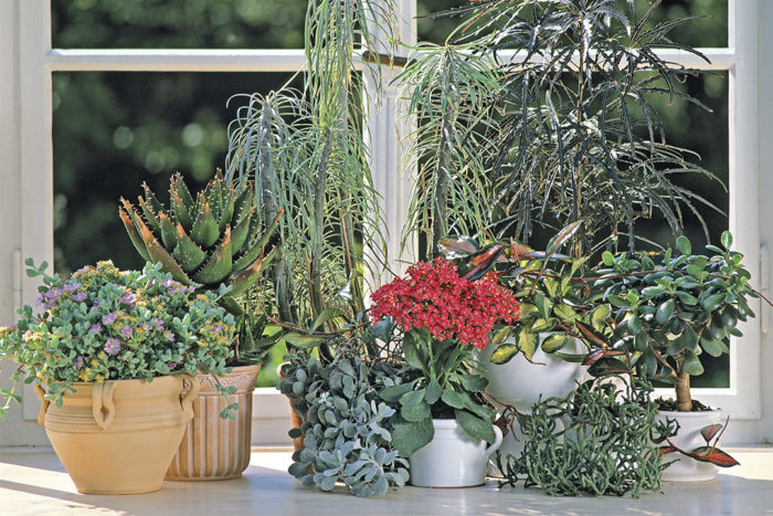 Succulents Indoors: As Easy As You Might Think?