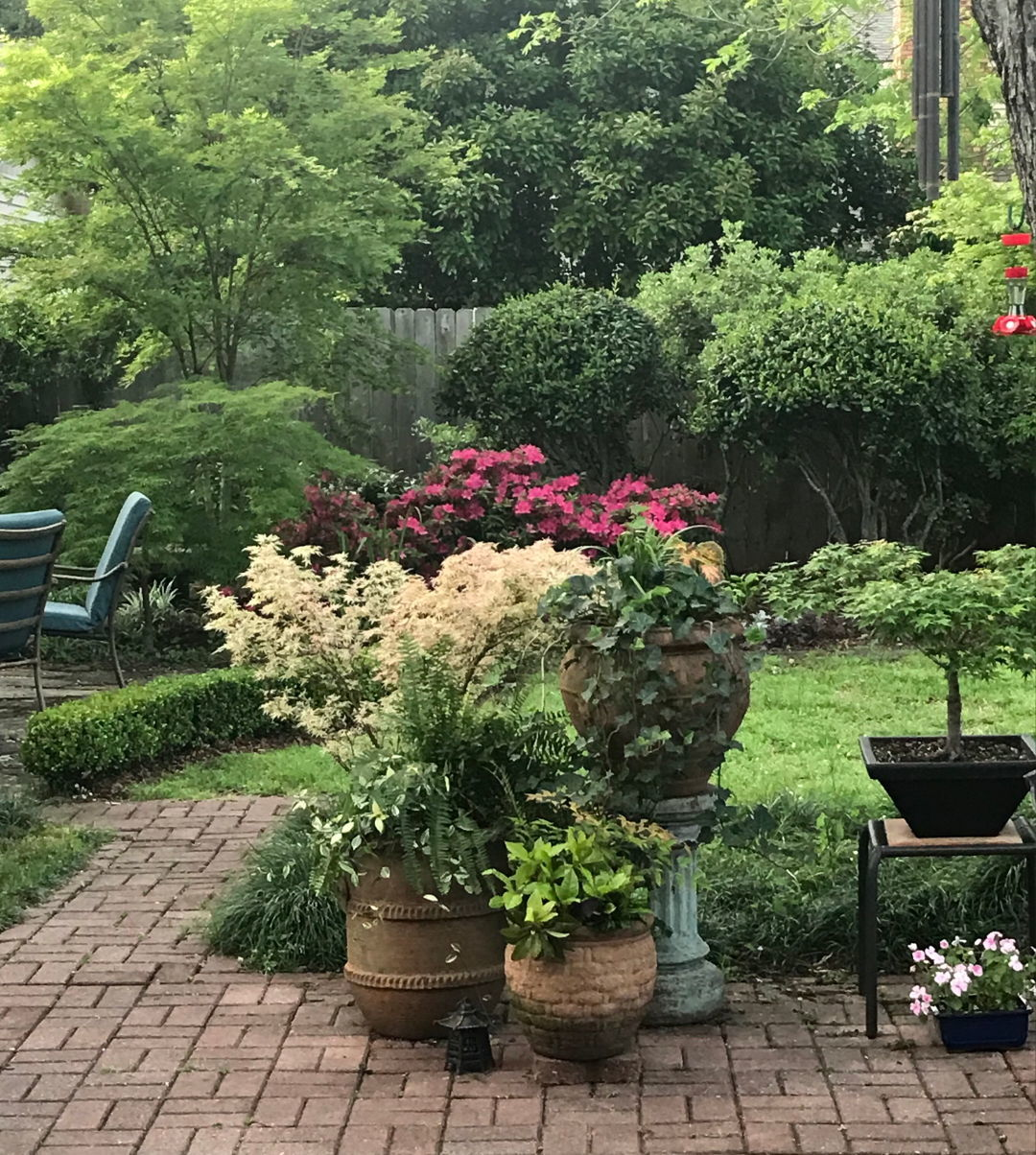 Collecting Japanese Maples Finegardening