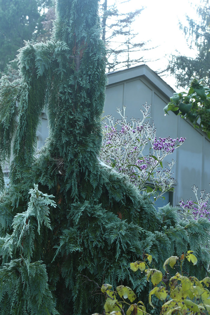 High-Impact Plants That Are Cold Hardy