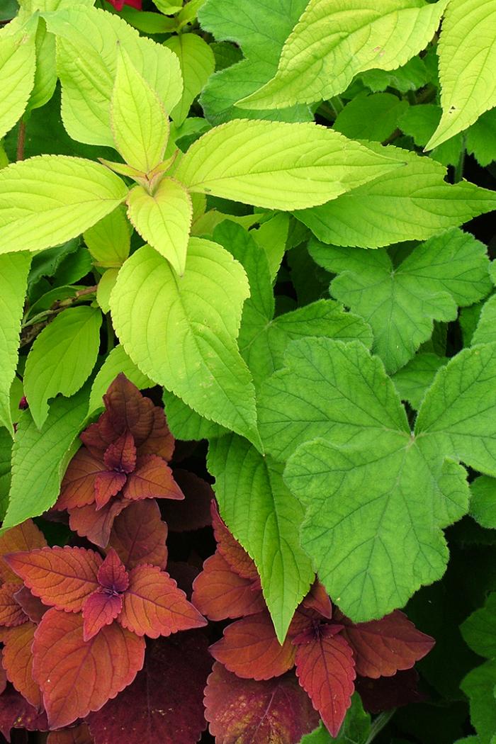 Mid-Atlantic: September Garden To-Do List
