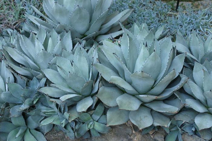 Southwest: September Garden To-Do List