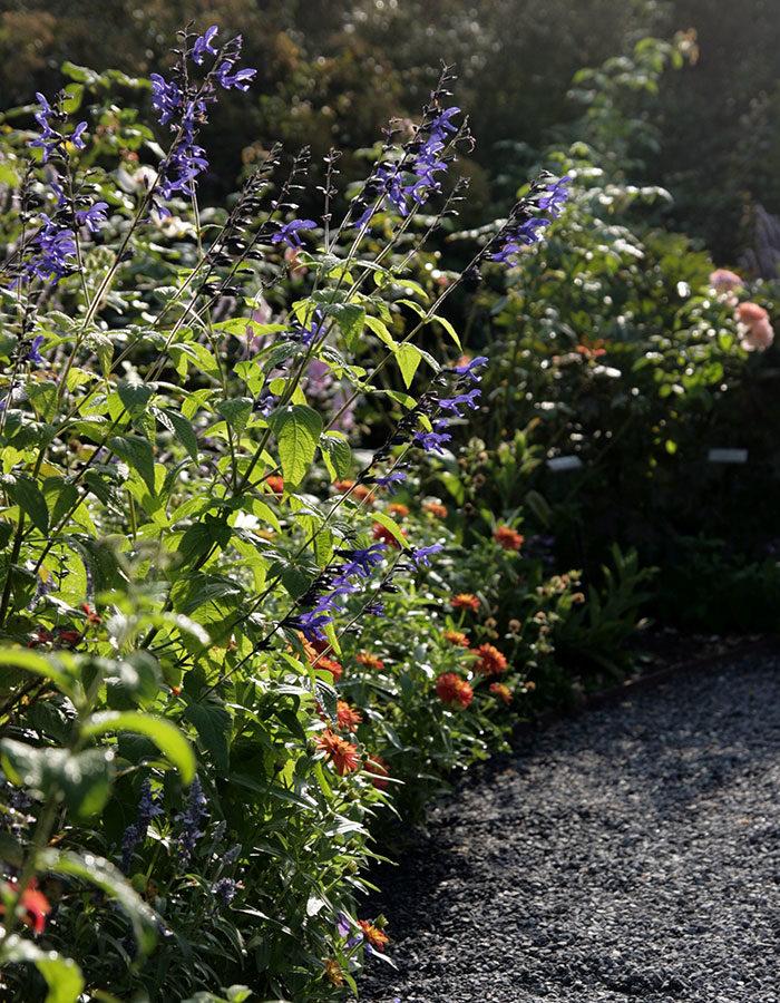 Northeast: September Garden To-Do List