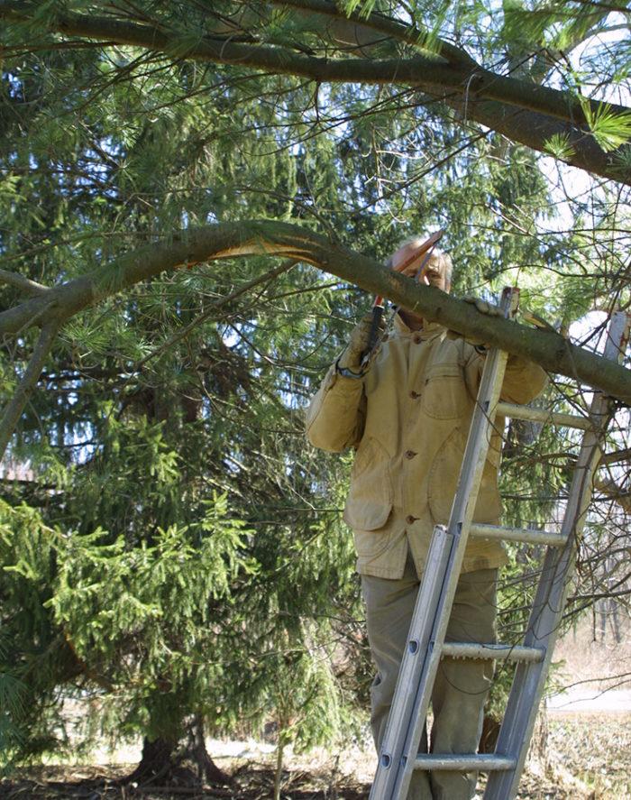pruning a dead limb