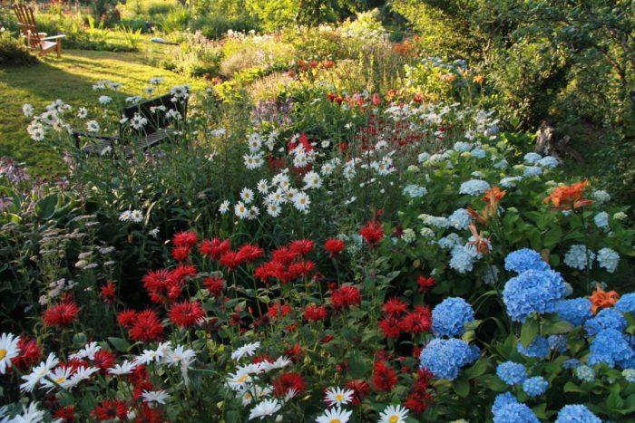 Another Year in a Wonderful Garden