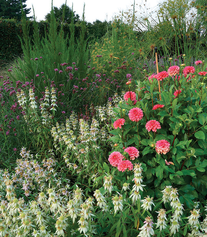 diverse mixed planting