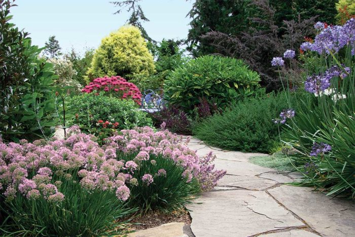 10 Small Plants To Grow Now Finegardening