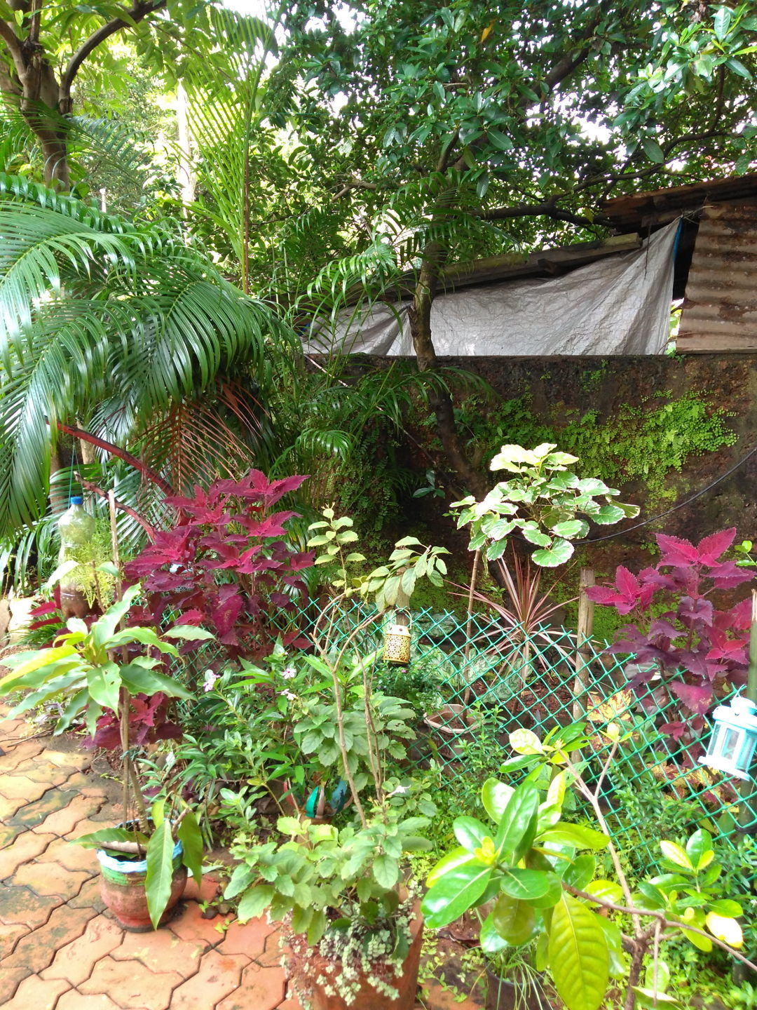 Adapting To Shade In A Tropical Garden Finegardening
