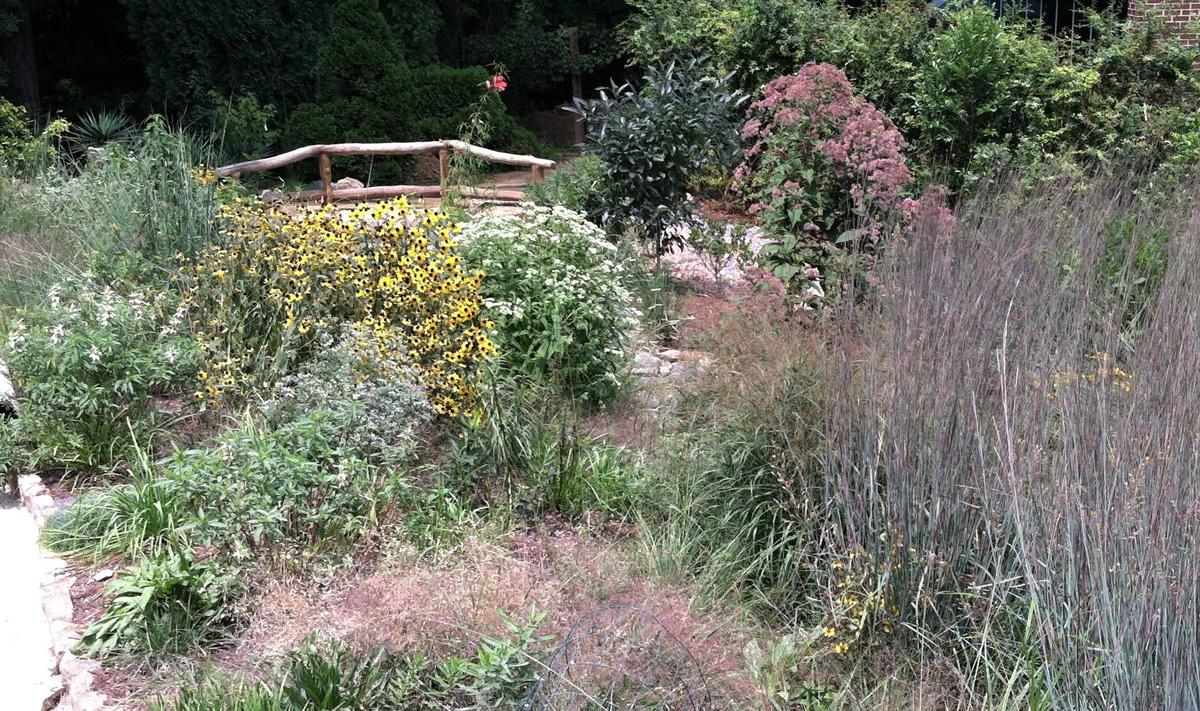 native plants garden border