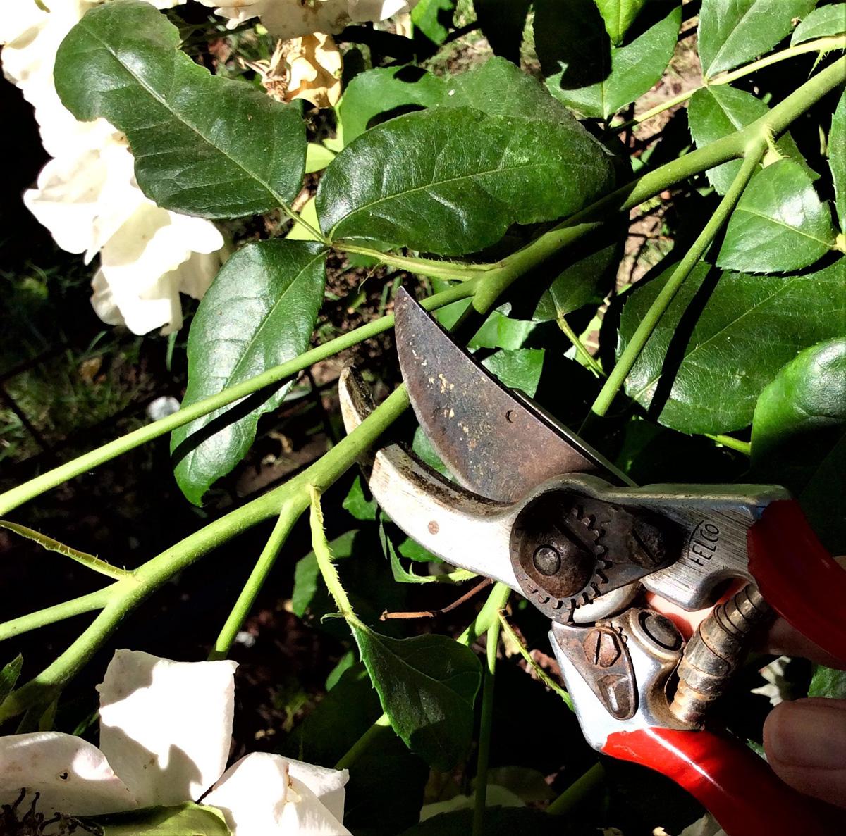 deadheading annuals and perennials