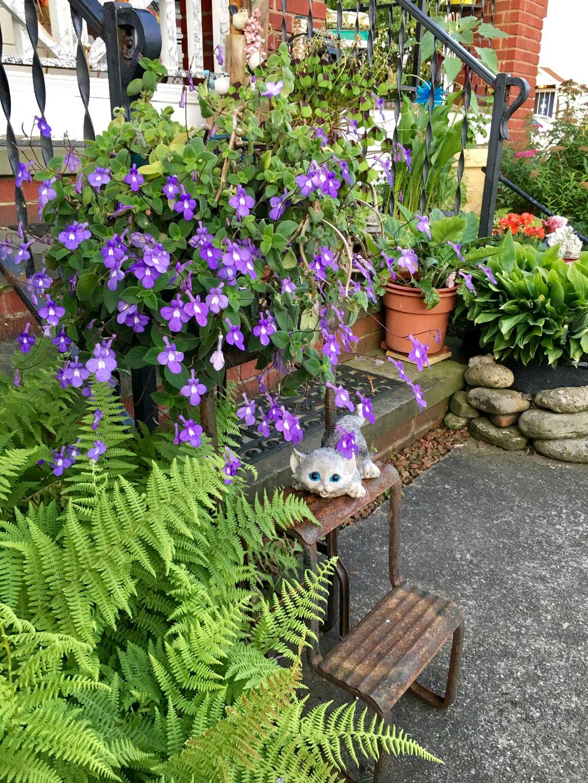 dauphin violet