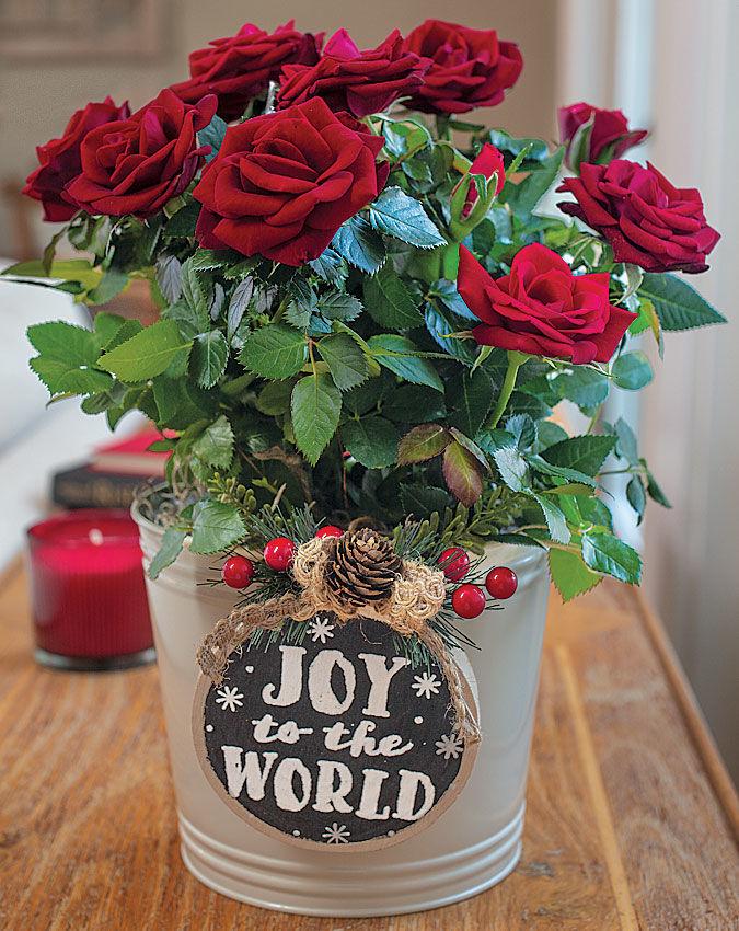 Joyous Red Rose