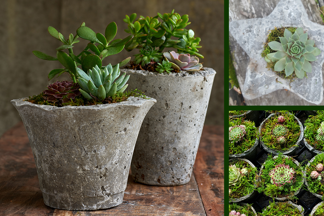 Mod Pots and Plants