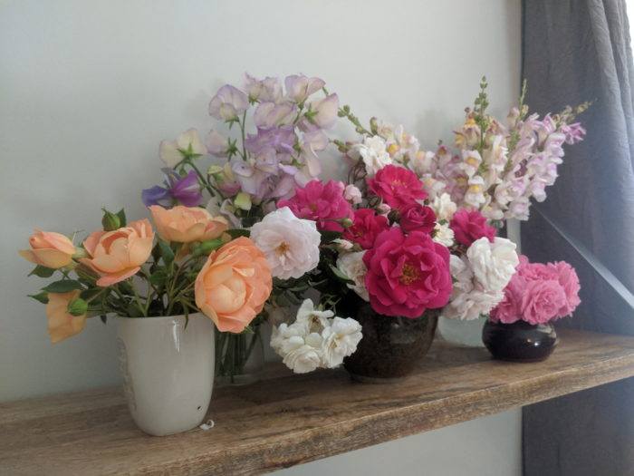 Favs From The 2019 Garden Finegardening