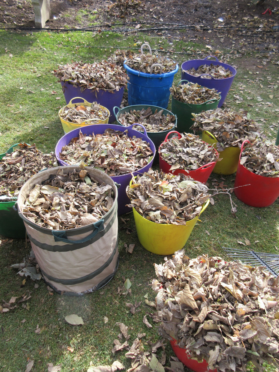 leaves collected in buckets to make leaf mold
