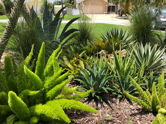 Creating a Garden From Nothing in Florida