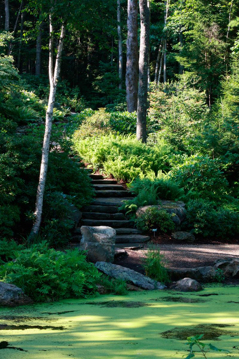 Coastal Maine Botanical Garden rhododendron garden