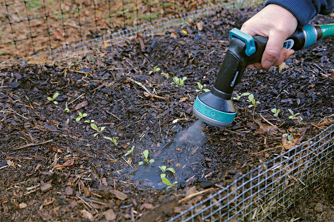Watering seeds.