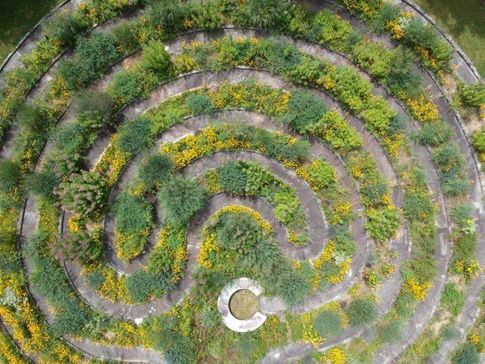 A Wildflower Labyrinth