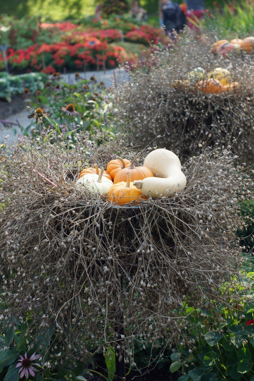 decorative gourds