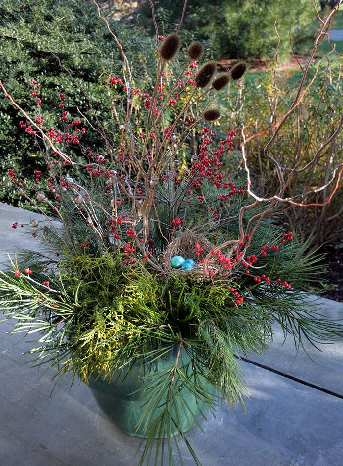 holiday plant arrangement