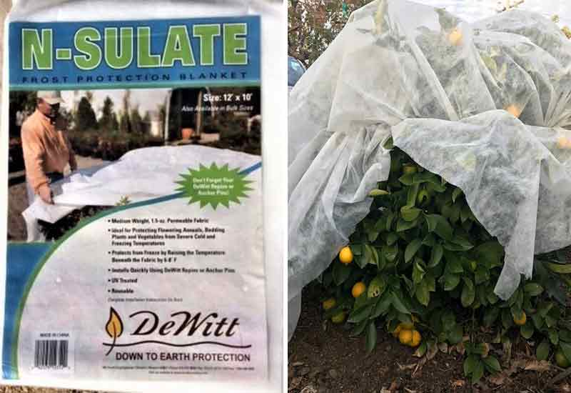 Protect citrus trees