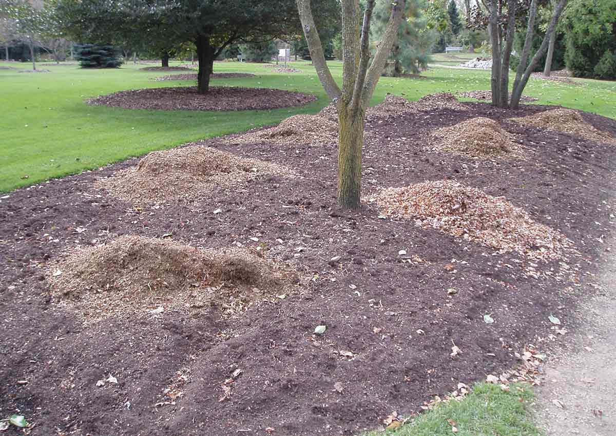 using leaf mulch