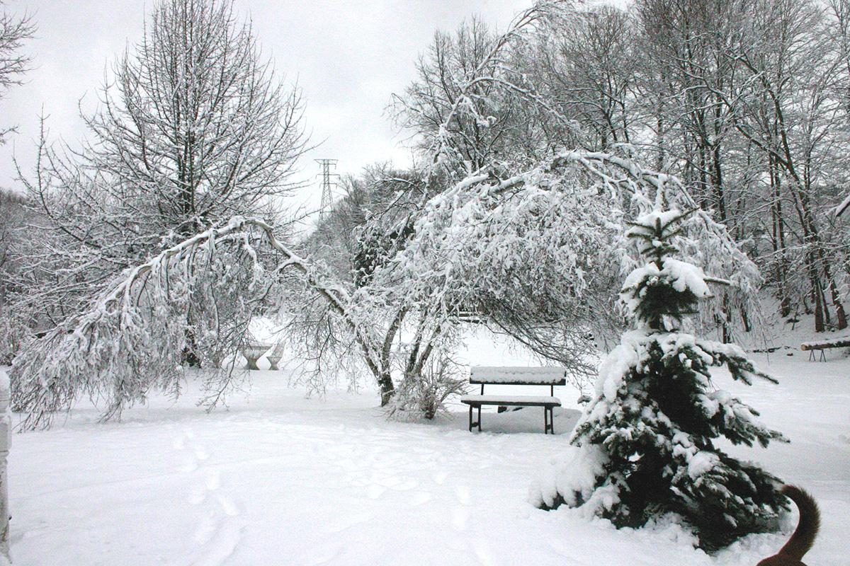 broken branches under snow