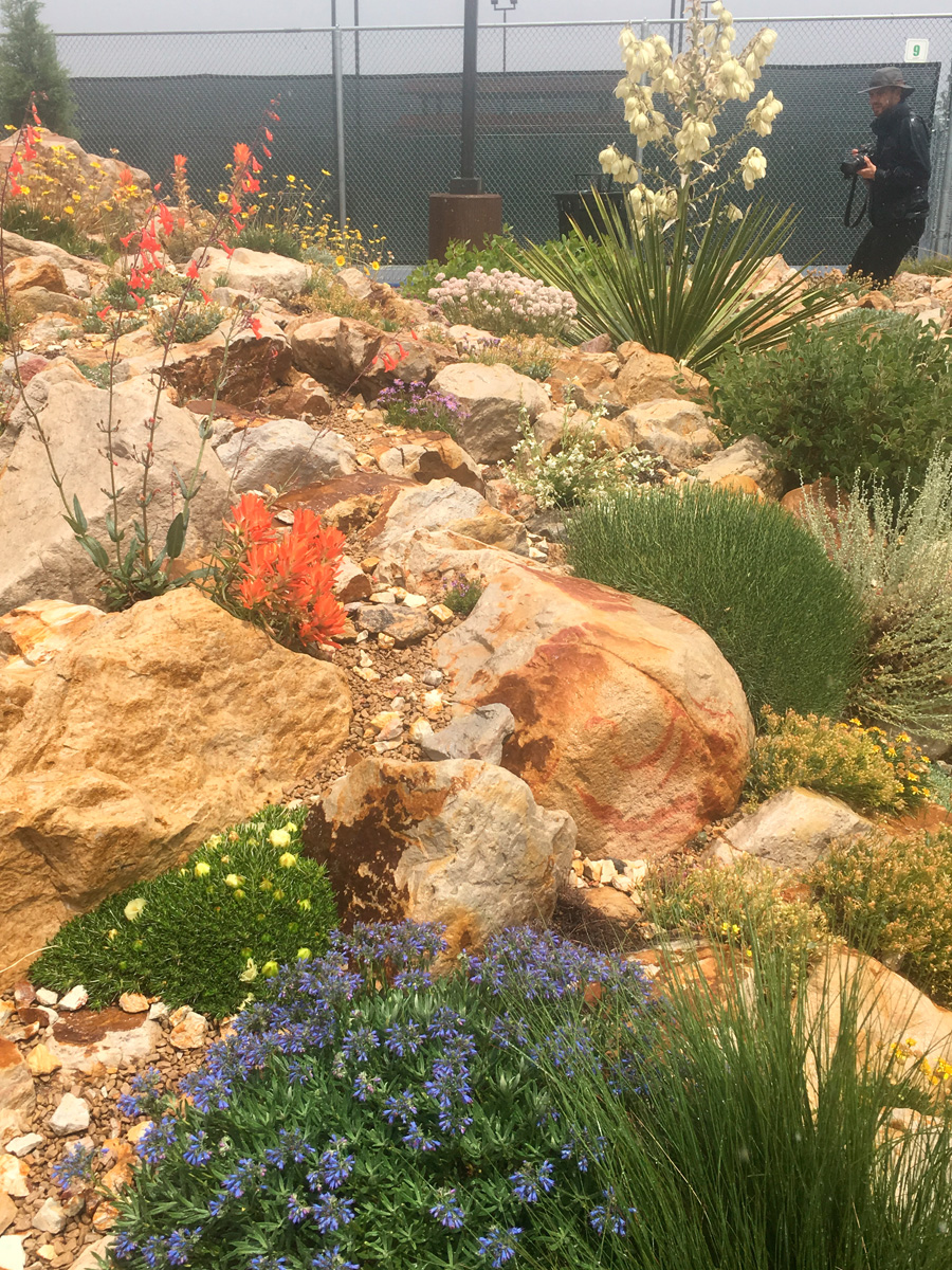 This crevice garden was built with 60 tons of sandstone and incorporates a mix of showy flowers.