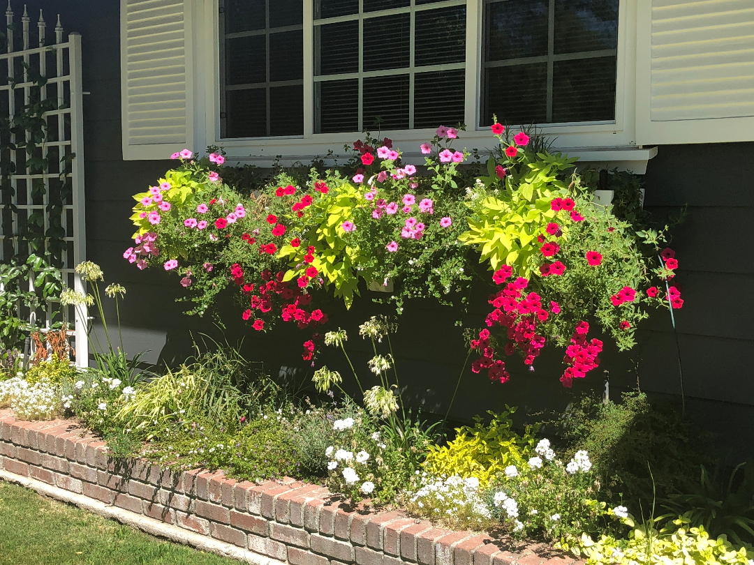 pink and red petunias