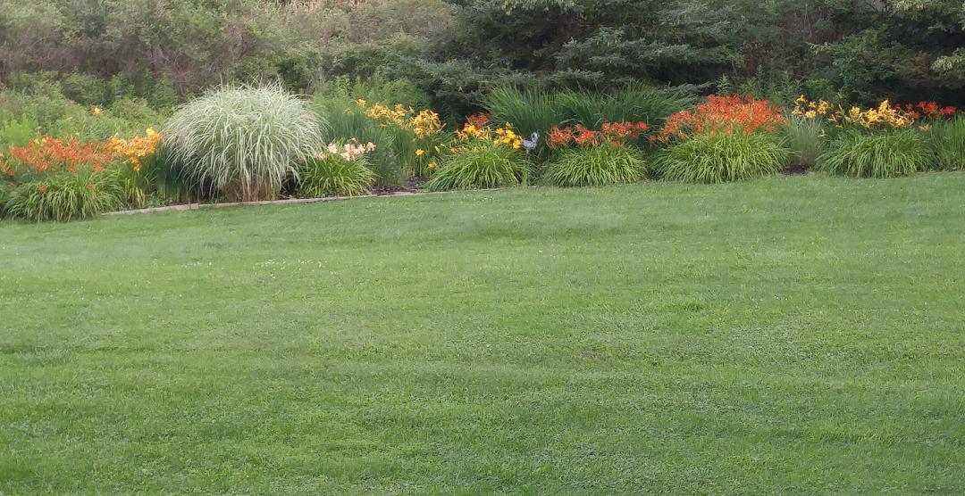 daylily border