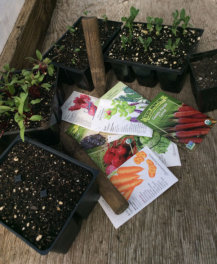 Tips and Tricks for Starting Perennial and Vegetable Seeds