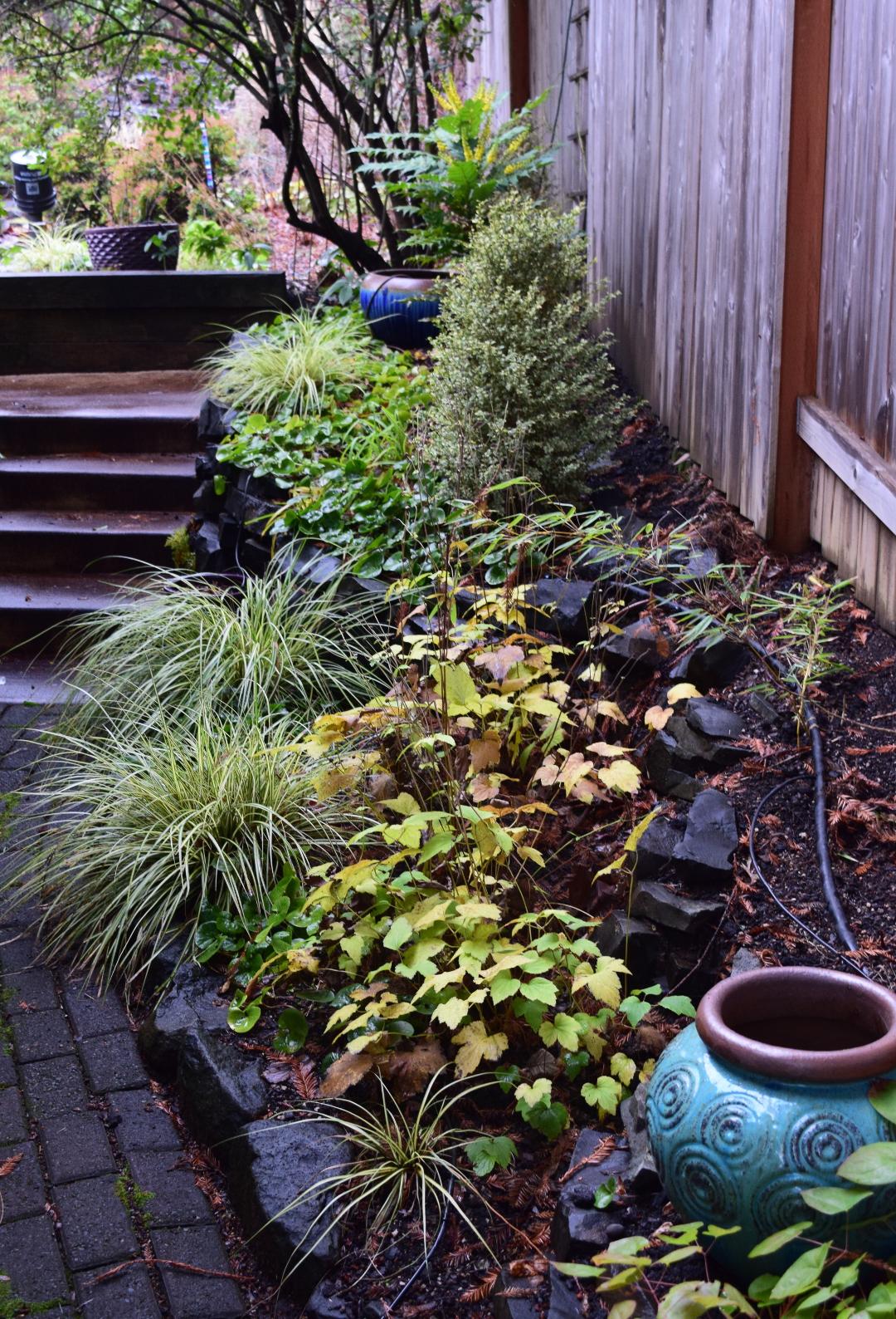 evergreen Carex