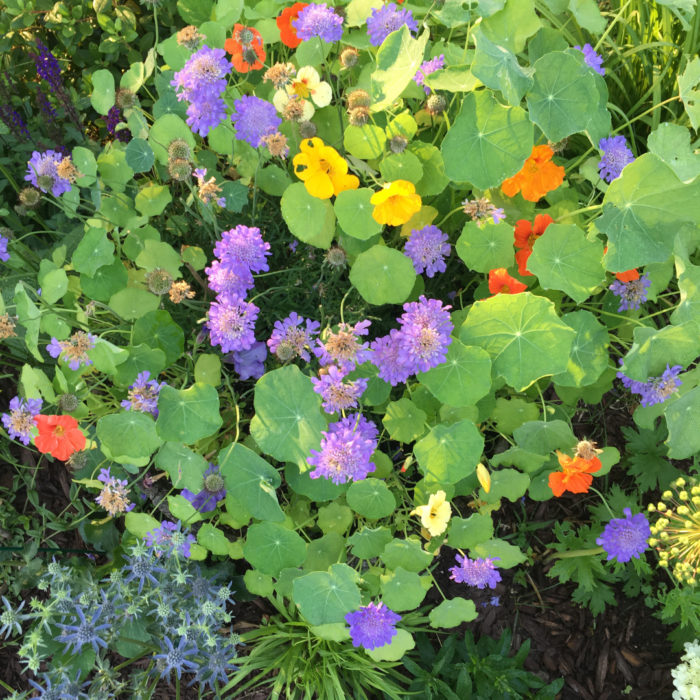 Embracing Color in the Garden