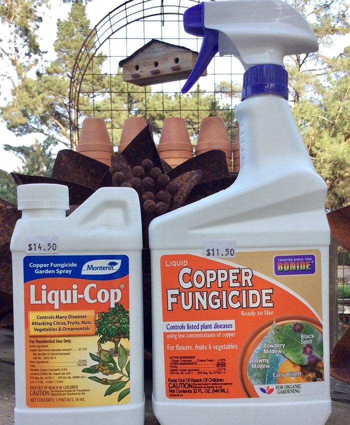 Rose fungicides