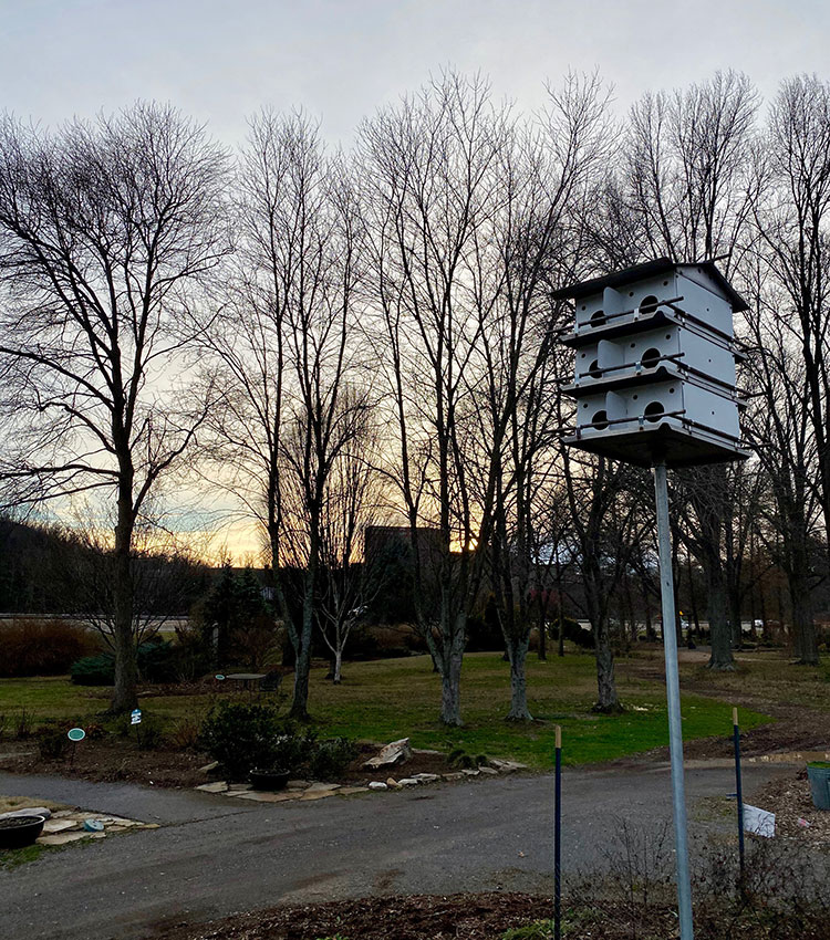 Purple martins birdhouse