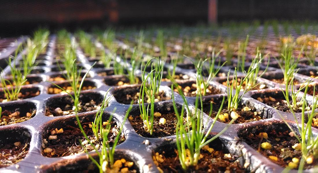 fiber-optic grass