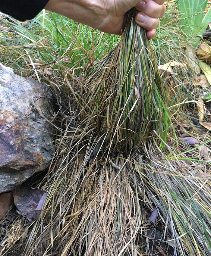 pruning grass