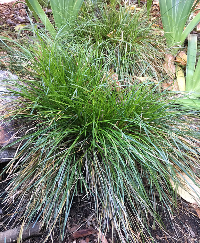 trimmed grass